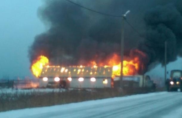 Две лошади погибли при пожаре в конюшне на Московском шоссе
