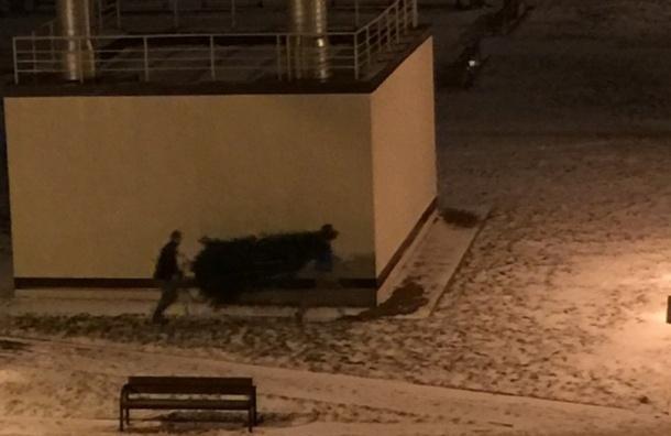 Жительница Шушар рассказала про воров, укравших новогоднюю ель