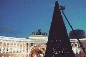 Новогоднюю елку установили на Дворцовой