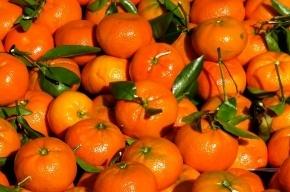 Фура с 18 тоннами мандаринов пропала в Петербурге