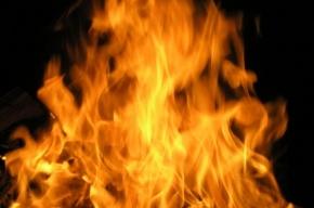 Труп мужчины нашли после пожара в вагончике на Лиговском проспекте