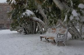 Жители Сочи спасают пальмы от снега