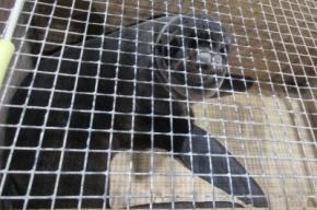Морские котики из Крыма прошли в Петербурге ветеринарный контроль