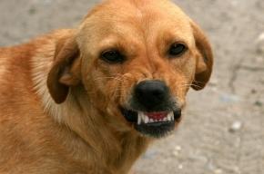 Собаки съели мужчину в Сертолово