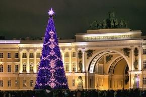Елку начали собирать на Дворцовой площади