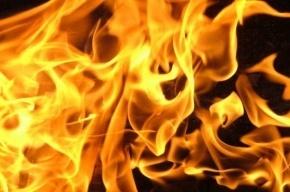 Сразу четыре грузовика сожгли на стоянке в Сестрорецке