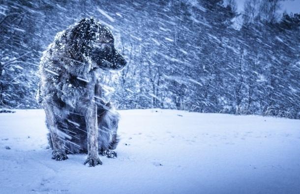 МЧС предупреждает о штормовом ветре и метели в Петербурге