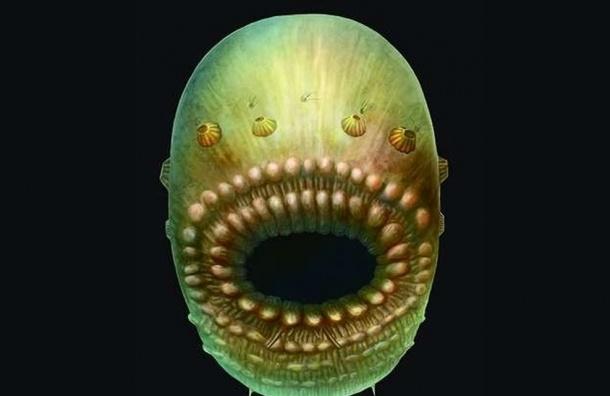 Самый древний предок человека оказался похож на зубастый мешок