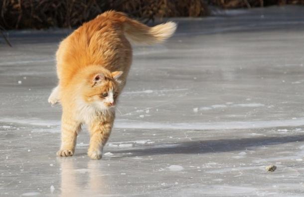 Гололед и ветер ждут петербуржцев в понедельник