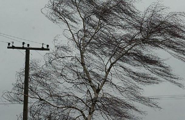 Ночью 20 января МЧС обещает сильный ветер в Петербурге