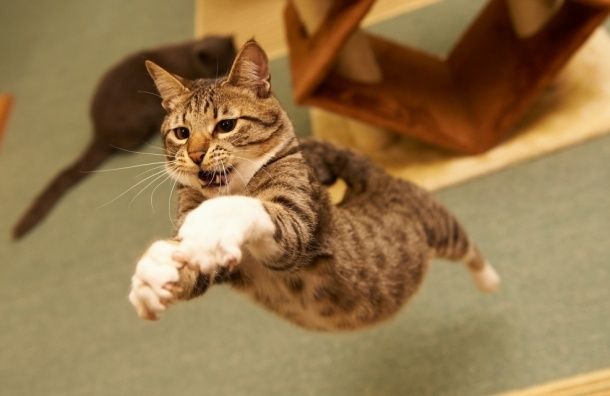 Русский кот-экстрасенс оценен в5 млн руб.