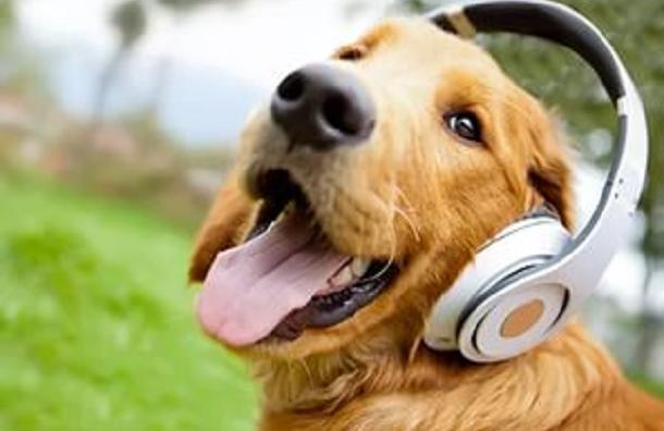 Учёные изШотландии узнали любимый музыкальный жанр собак