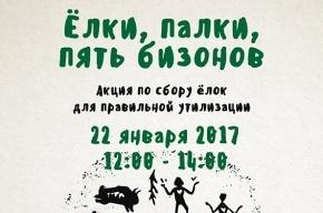 Петербуржцы могут отдать елки зубрам