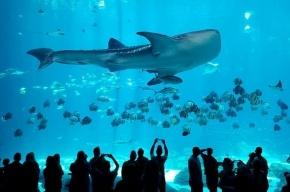 Крупнейший океанариум построят в Купчино