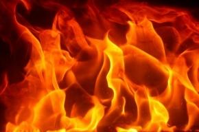 Пожар тушили в Пушкинском районе