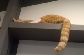 Кота, замотанного скотчем, подкинули в «Республику котов»