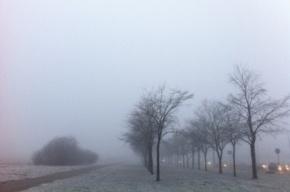 Завтра в Петербурге ожидается туман и плюсовая температура