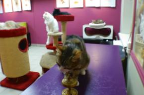 Эрмитажного кота научили считать и извлекать квадратный корень
