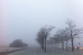 Петербург ждет в воскресенье туман, дождь и гололед