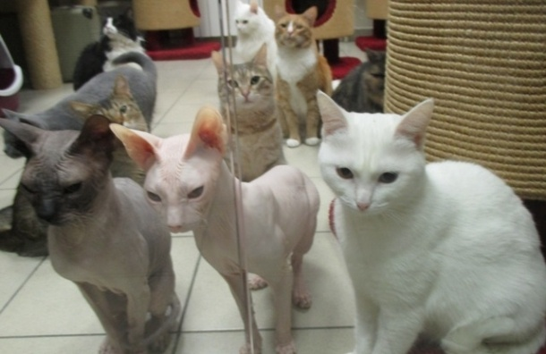 Две с половиной тысячи котов стерилизуют в SpayDay