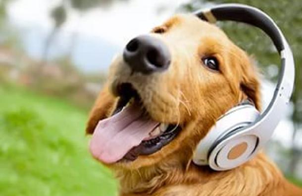 Ученые рассказали, как подсчитать возраст собаки