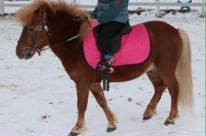 Сбежавшего от хозяина пони всю ночь искали в Петербурге