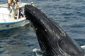 Ученые узнали, почему киты и дельфины выбрасываются на берег