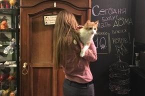 Будь человеком – кастрируй кота!