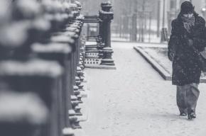 Петербург заметет снегом в День защитника Отечества