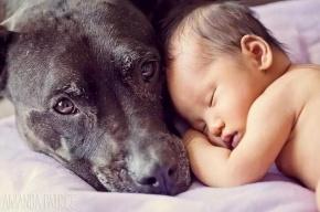 Собака спасла брошенного на морозе ребенка в Алтайском крае