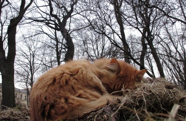 SpayDay 2017: за день кастрировали 1300 котов