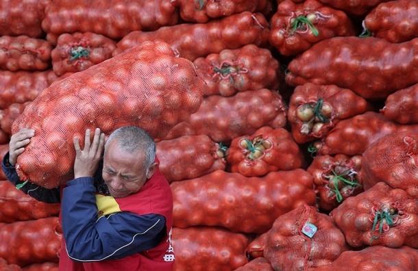 Снят запрет с ввоза в России лука и капусты из Турции