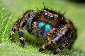 Ученые: пауки за год могут съесть всех людей и остаться голодными