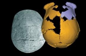 Археологи заявили о найденном в Китае черепе неизвестного вида людей
