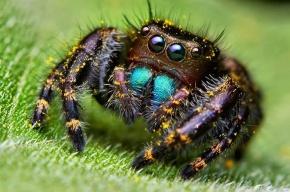 Ученые узнали, сколько мяса съедают пауки за год