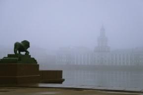 МЧС предупреждает о тумане в Петербурге