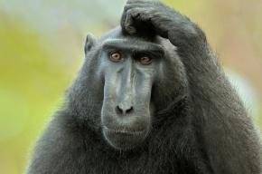 Ученые узнали, что превратило обезьян в человека