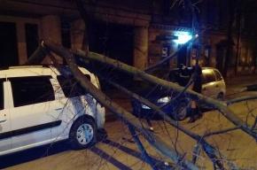 Дерево рухнуло на машину на Съезжинской улице