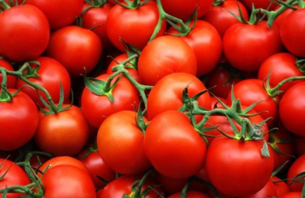 Запрет на поставки помидоров из Турции обошелся России в $1,5 млрд