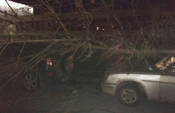 Дерево рухнуло на машины на Кирилловской улице