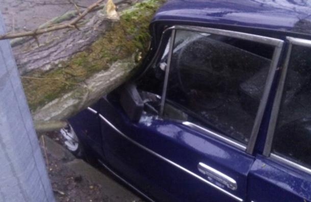 Очевидцы: две машины пострадали из-за деревьев на Энгельса
