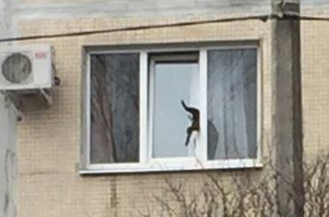 Застрявшего кота спасли в Калининском районе