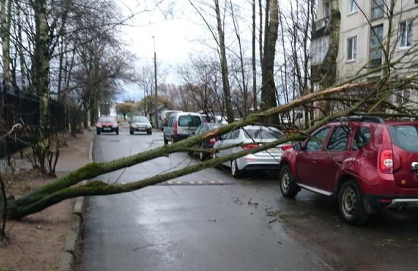 Ветер на улице Руставели уронил дерево на машину