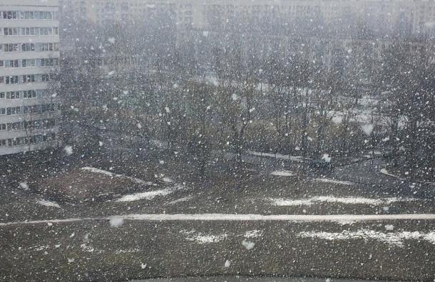 Петербург накрыло мощным апрельским снегопадом