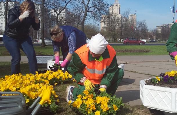 Петербург начали украшать цветами ко Дню Победы