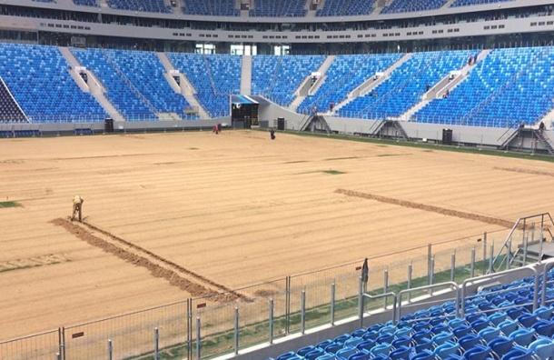 Работа по замене газона на новом стадионе в Петербурге оценена в 3 млн рублей