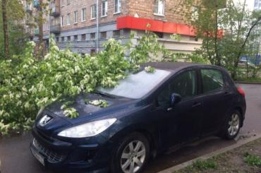 Черемуха рухнула на машину на улице Шелгунова