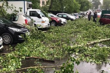 Ураган вМоскве стал самым крупным почислу жертв запоследние 100 лет