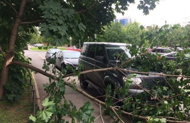 Упавшее дерево придавило машину на Серебристом бульваре