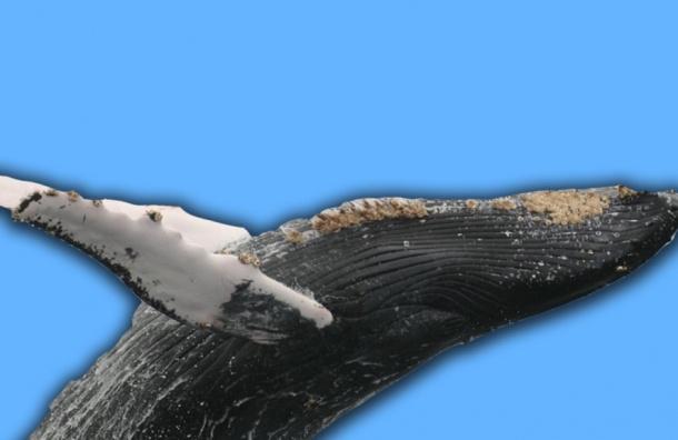 Павел Астахов представил свою книгу про детей и синих китов